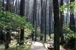 Ir. Juanda Grand Forest Park - Bandung
