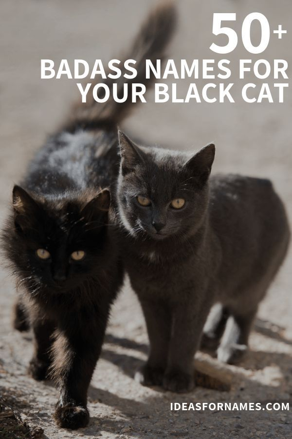 White Cats Witch Cats And Kittens In 2020 Cat Names Badass Cat Names Black Cat