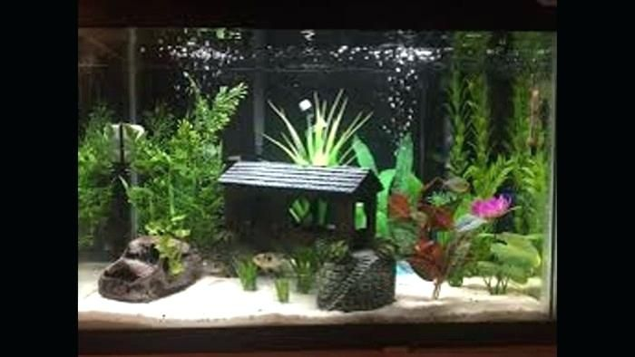 Magnificent Fish Tank Decorations Ideas Inspirational Fish Tank