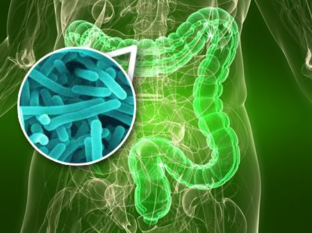 Gut bacteria linked to the development of type 2 diabetes