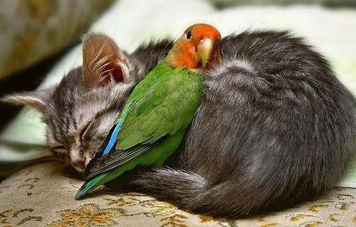Always best friends ...: Animal Friendship, Cat, Best Friends, Parrots, Snuggle, Bestfriends, Odd Couple, Cuddling Buddy, Birds