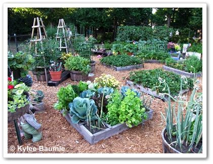 1000 images about garden sfg on pinterest gardens for Square foot garden designs