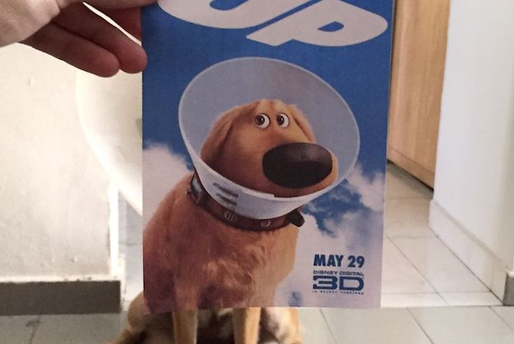 Instagrammer Combines Dogs With Famous Movie Posters
