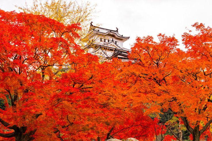 Zamek Himeji w prefekturze Hyogo, jeden z najstarszych i najsłynniejszych…