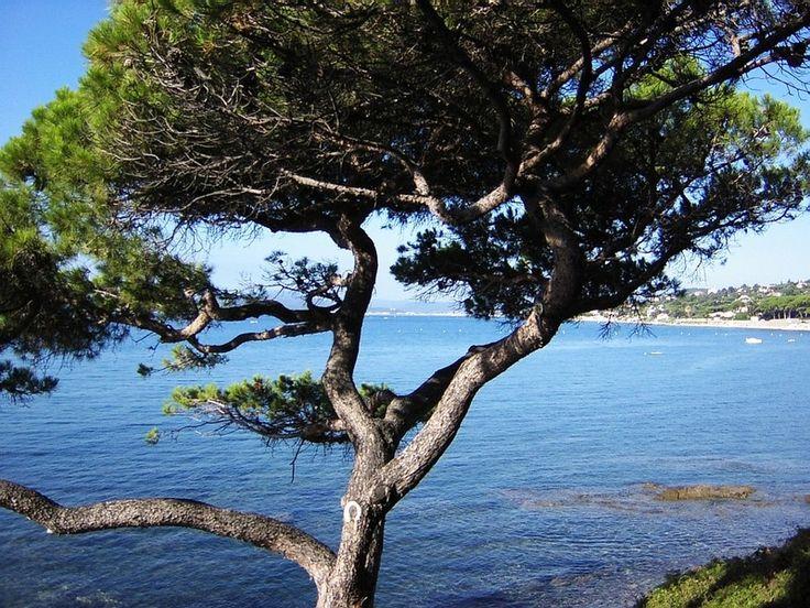 Sainte Maxime tourisme