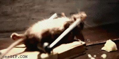 rato-de-academia