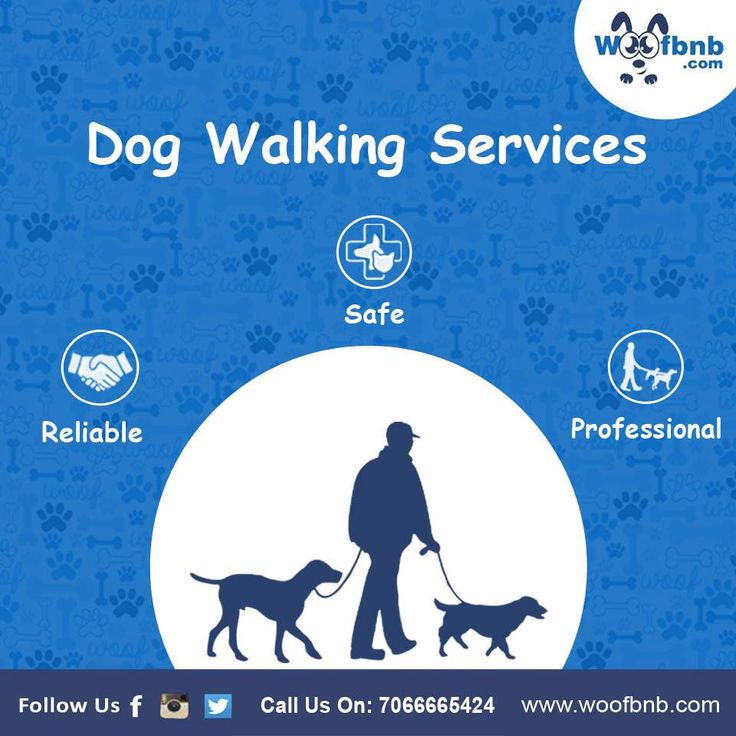 https://flic.kr/p/QXay8C   15941441_1209883805761938_8062933531059864793_n   Pet Grooming Services in Pune, India – WOOFBNB