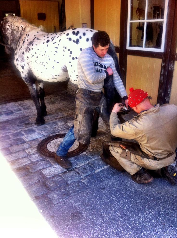 Neue Sohlen für unsere treuen Brauerei-Pferde. #Stiegl #Tigernoriker