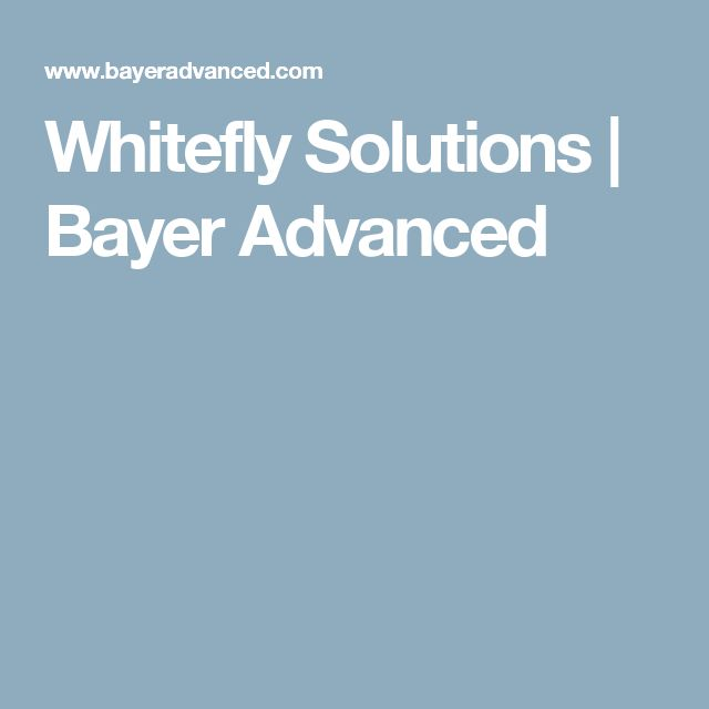 Whitefly Solutions | Bayer Advanced
