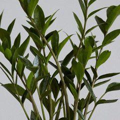 66a6f70956cfa11e762b6a7bd9858d68  Desk Plant Potted Plants