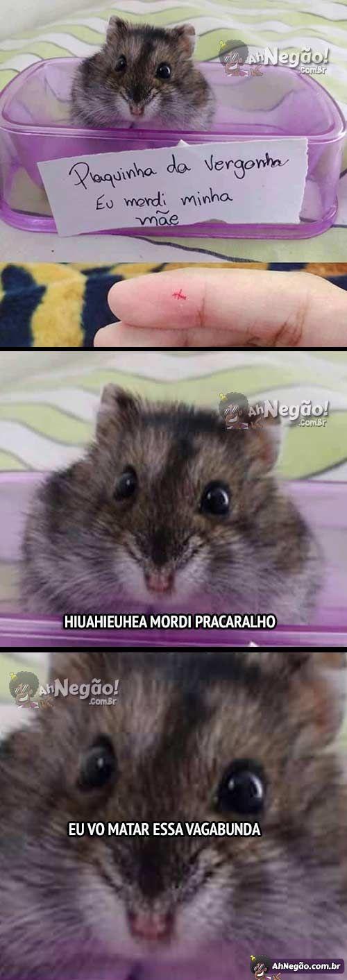 O meu Hamster fez pior ele mordeu meu dedo por que irritei ele dai saiu uma cachoeira de sangue do meu dedo