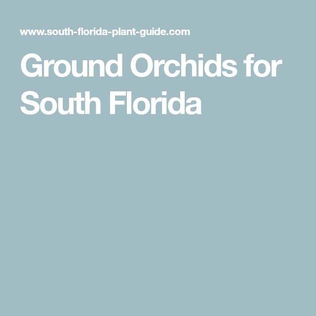 Ground Orchids for South Florida