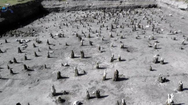 Πάσσαλοι που ήρθαν στο φως κατά τις ανασκαφές. Ο προϊστορικός οικισμός βρίσκεται στη θέση Νησί. χρονολογείται στο τέλος της Μέσης και στη Νεότερη Νεολιθική εποχή