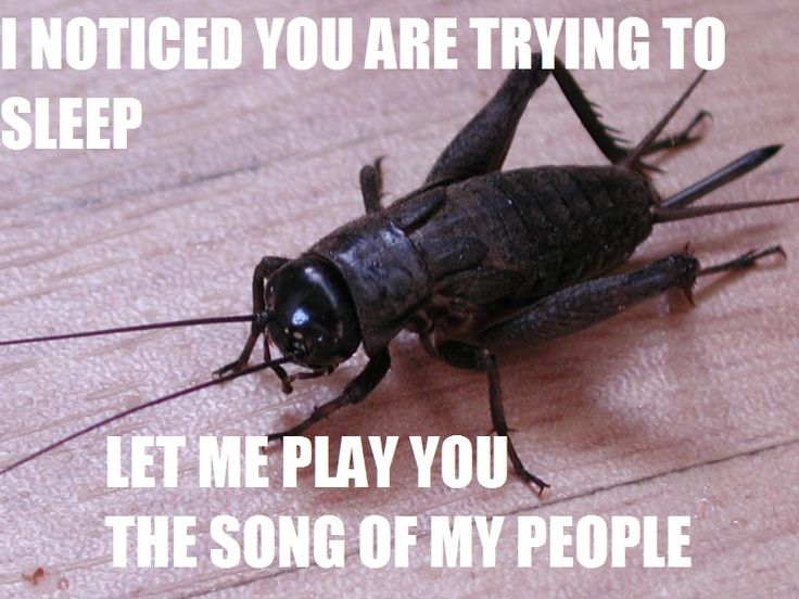 Cricket Insect Funny Memes