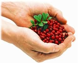 Linconberries