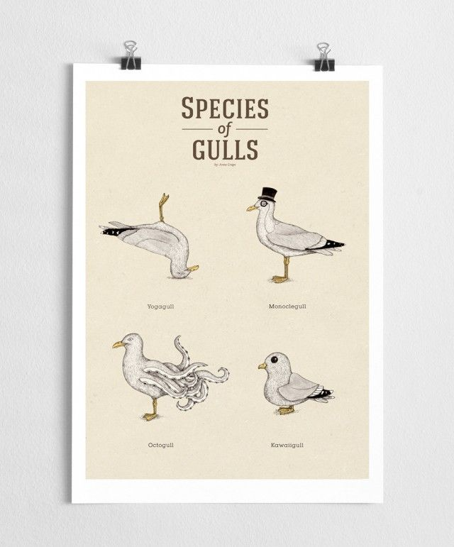 Species of Gulls vol. 1, a poster by A Grape Design #nordicdesigncollective #agrapedesign #seagull #seagulls #species #speciesofseagulls #poster #print #bird #sea #ocean #summer #hellosummer #westcoast #eastcoast #yoga #yogaagull #monocle #monoclegull #octopus #octogull #kawaii #kawaiigull #weather #archipelago