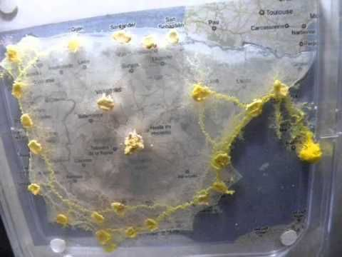 Best Slime Mould Ideas On Pinterest Fungi Images Fungi And - Slime mold map of us