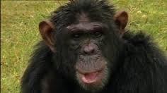 Monkey World's Charlie R I P