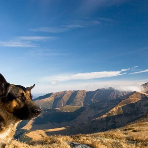 Views of a German Shepherd Dog and some scenic mountain ranges.