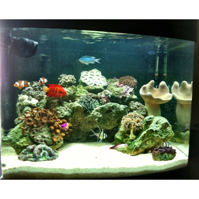 29 gallon bio cube reef tank pets pinterest reef for Cube saltwater fish tank