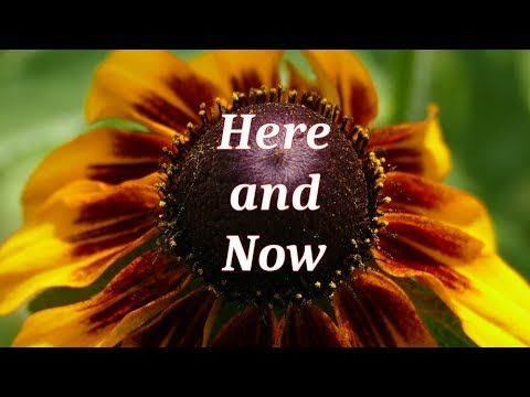 MMM: Microdac Meditation Minute - Here and Now
