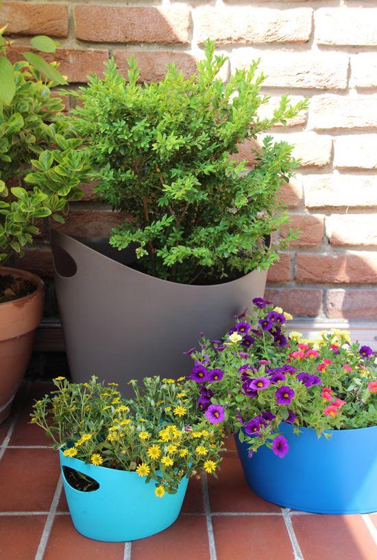 binedoro Blog, Urban Gardening, Balkon, Pflanzen, Kräuter, Sommer ...