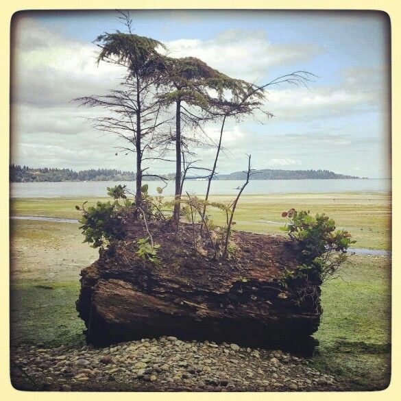 Vashon Island in Vashon, WA Fern Cove 4/3/16