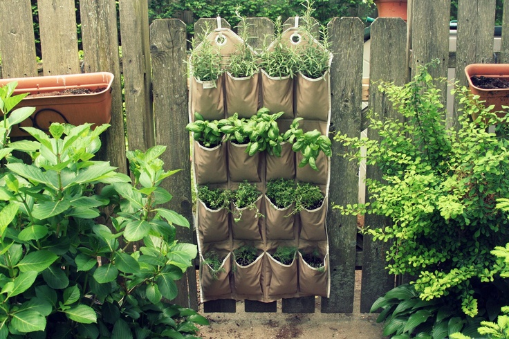 Diy Vertical Herb Garden Didn 39 T Have A Sunny Place To