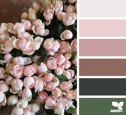 color blooms | design seeds | Bloglovin