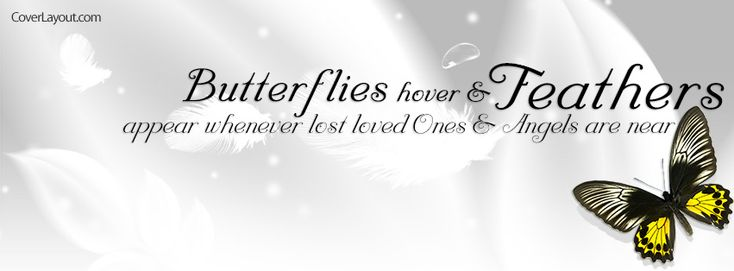Butterflies Hover and Feathers Appear Facebook Cover CoverLayout.com