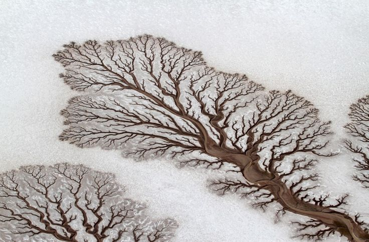 Ποτάμια που μοιάζουν να δημιουργούν φιγούρες δέντρων στην έρημο της Μπάχα. © Adriana Franco