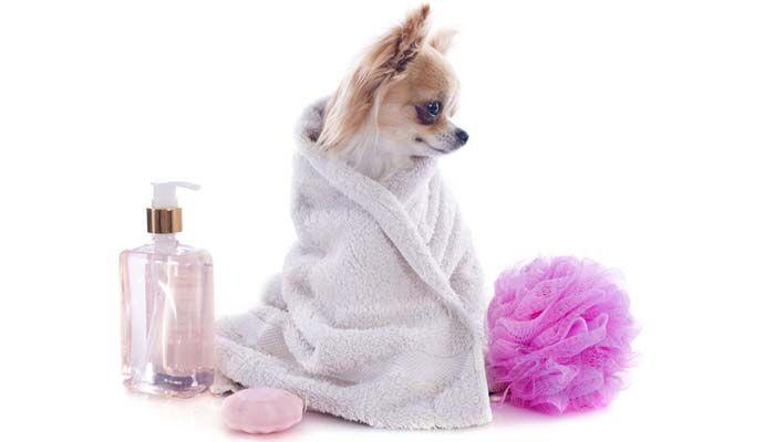 die besten 25 floh shampoo ideen auf pinterest. Black Bedroom Furniture Sets. Home Design Ideas
