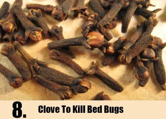 Best 25 Killing Bed Bugs Ideas On Pinterest