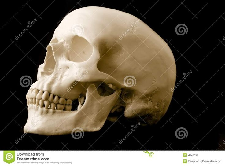 skull side view - Google Search