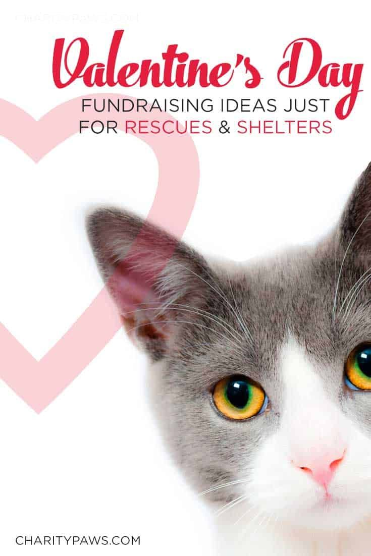 Valentine S Day Rescue Fundraiser Ideas Animal Shelter Fundraiser Fun Fundraisers Charity Work Ideas