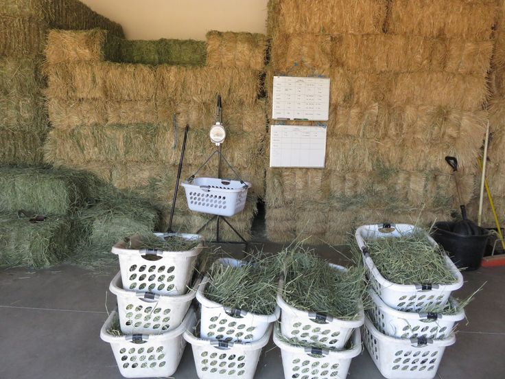 "Training Tips for your horse by Jackie Brittain ""A tip for weighing and saving your hay"" Perhaps I am a bit off the subject of training tips, but I would like to share a method for weighing and saving your hay. Today's hay prices make it necessary to shop smartly for your next load of …"