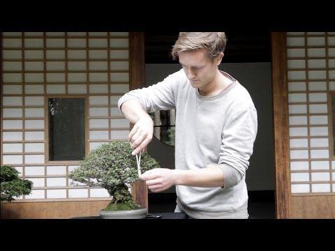 Orientações de cuidados para bonsai de Olmo Chinês (Ulmus parviflora) - Bonsai Empire