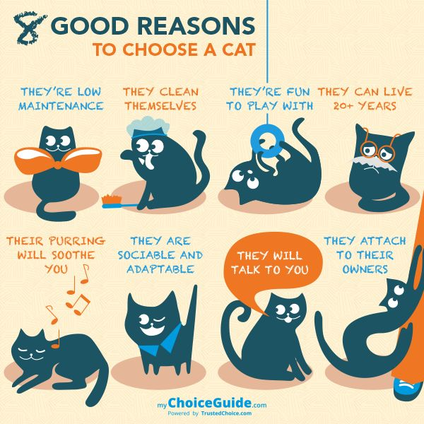 8 good reasons to get a cat and how to choose the right one.