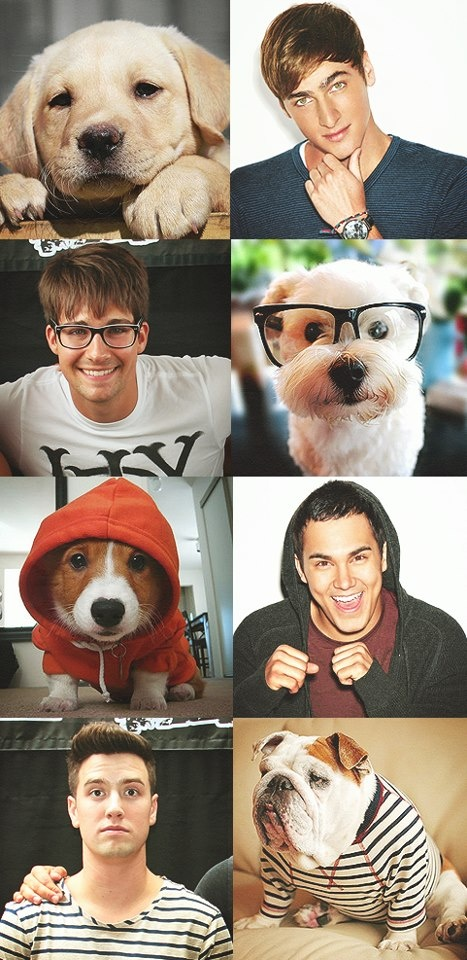 Big Time Rush with dog look-alikes. I love this because its BTR! I luv Logan's dog look alike