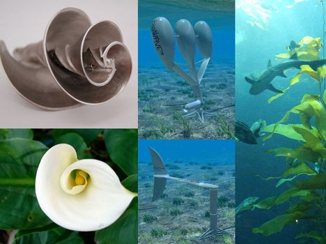 Nature-Inspired Innovation: 9 Examples of Biomimicry in Action