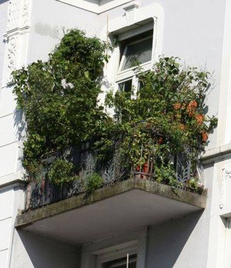 23 best balcony garden images on pinterest apartment for Plants for apartment balcony