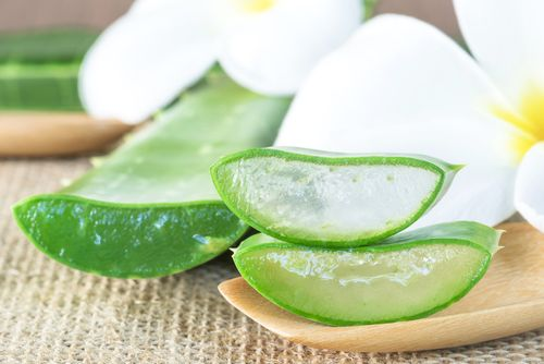 Traditional Uses Of Aloe Vera From All Around The World