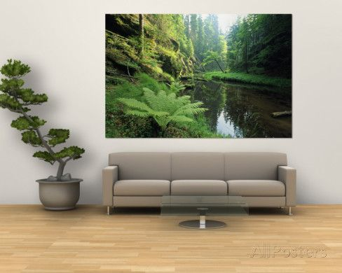 Woodland View with Ferns Along Stream Wall Mural