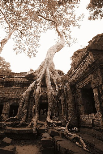 A tree that eats buildings at the Angkor Ruins in Cambodia? Who doesn't want to see that?!