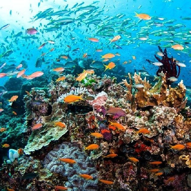 Best 20 great barrier reef diving ideas on pinterest great barrier reef snorkeling great - Best place to dive the great barrier reef ...
