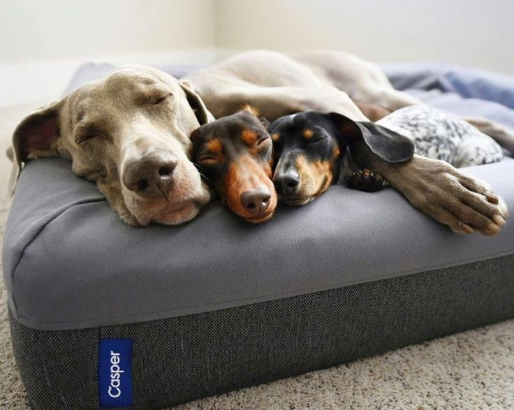 Enter To Win A Large Casper Dog Bed In Gray 225 Value Dog Mattresses Dogs Beautiful Dog Beds