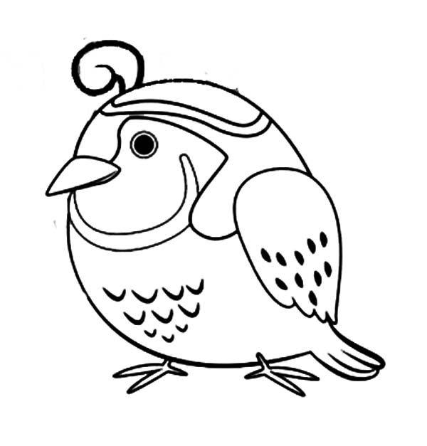 Quail, : Chibi Quail Coloring Page | Coloring pages, Chibi ...