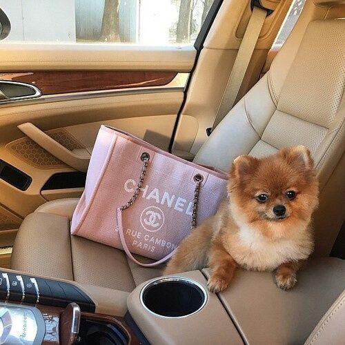 Imagem de chanel, dog, and car