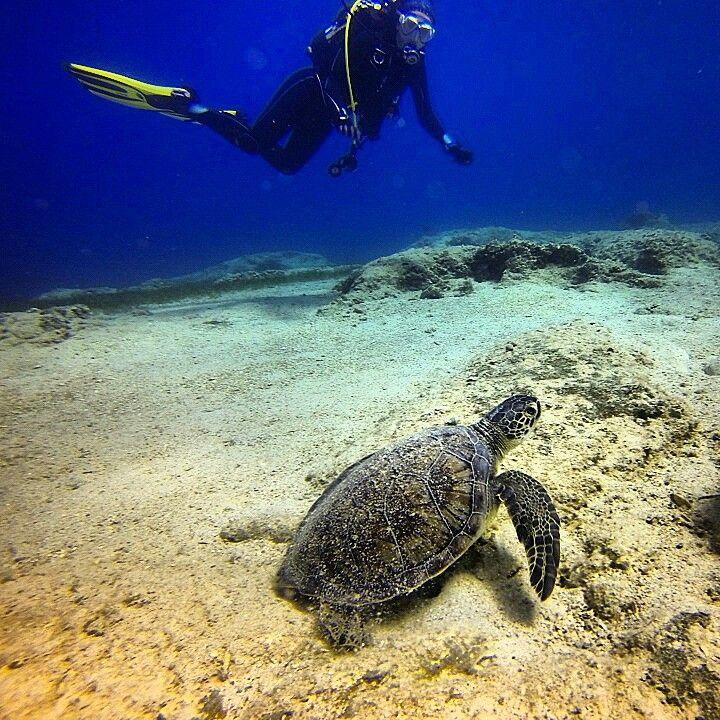 Scuba diving Kaş-Turkey #caretta caretta