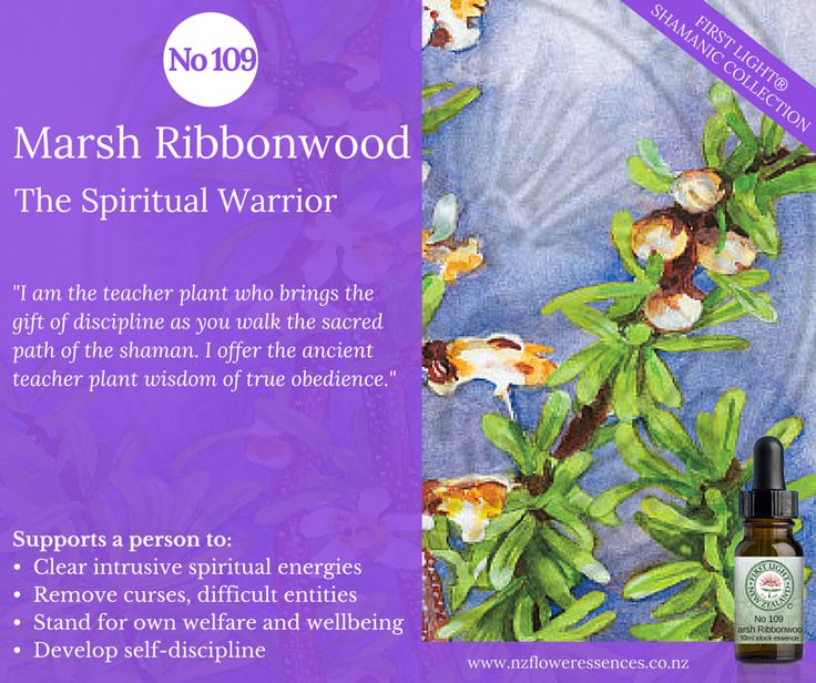 Marsh Ribbonwood - Spiritual Warrior - assists you to be in divine ego and to develop discipline and true obedience. Helps to bring the healed feminine and masculine energies in alignment and acts as a spiritual antidote for intrusive energies, curses and difficult entities.